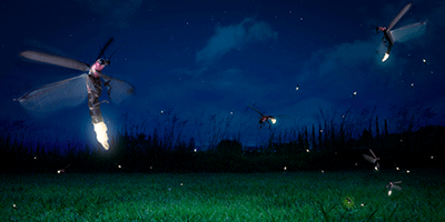 How Oxygen Kindles Fireflies