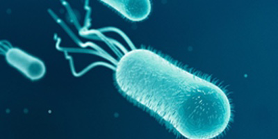 Synopsis: Bacterial Superfluids