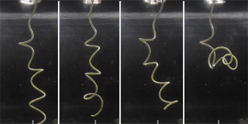 Synopsis: Buckling in Bacteria Tails