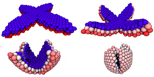 Synopsis: Shape Shifting Water Droplets