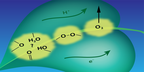 Synopsis: Pinning down the Chemistry of Photosynthetic Water Splitting